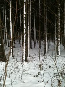 Wald Niederbayern