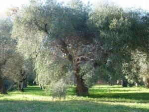 villaadriana-klaus-und-luis-017-300x225 dans Eborja