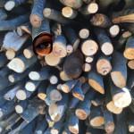 Holz_Sichtweisen 2018 Kopie