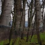Land_Holz_Land