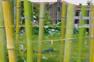 BambusstaatTraum Kopie